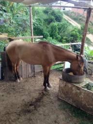 ? cavalo d montada i d carroça