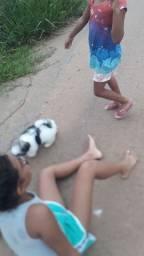 cachorro shitzu