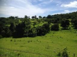 Arrendamento de Pastagens para Gado - Fazenda