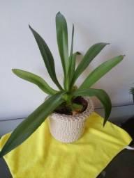 Planta verde e cachepo de croche