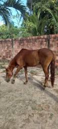 Título do anúncio: Cavalo de Vaquejada Mestiço