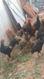 Título do anúncio: Vendo galinhas