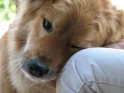 Cachorro pra doação urgente