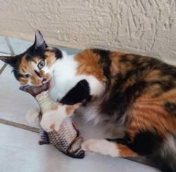 Fish Toy c/ CatNip para gatos