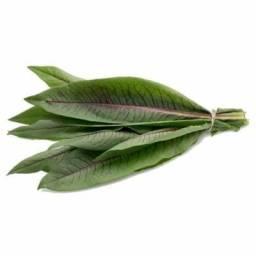 100 Sementes Almeirão Roxo - Lactuca Canadensis - Panc
