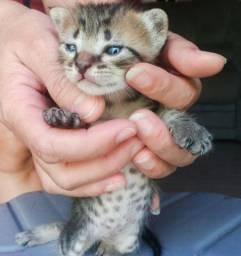 Doa-se linda gatinha em Juazeiro do Norte