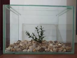 Aquário Beteira 11 Litros com Tampa + Pedra de Rio + Planta Artificial (30 x 20 x 20 cm)
