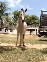 Título do anúncio: Cavalos