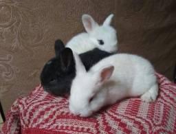 Lindos coelhos, ração, acessórios...