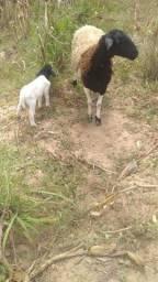 Título do anúncio: Vende-se e troca em gado