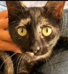 Filhote gatinha Gabriela para adoção