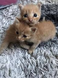 Doacão de dois gatinhos