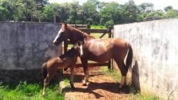 Cavalos de raça