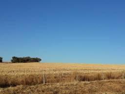 Fazenda de 28 alqueires ( 135 hectares ) Paraúna-GO ( soja )