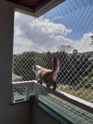 Tela para gatos