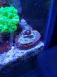 Corais marinhos