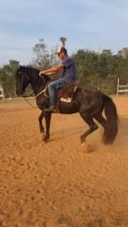 Cavalo lindo, crioulo com mangalarga bom de laço