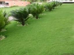 Gramas verdes