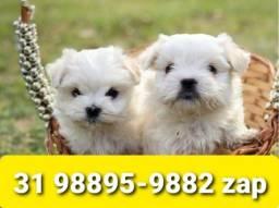 Título do anúncio: Lindos Filhotes Cães BH Maltês Basset Shihtzu Lhasa Yorkshire Beagle