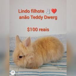 Título do anúncio: Mini Coelhos lindos