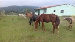 Cavalos, pônei e burro