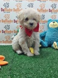 Título do anúncio: Poodle com Procedência- entregamos!