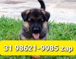 Título do anúncio: Canil Cães Filhotes Grande Porte BH Pastor Labrador Golden Rottweiler Akita