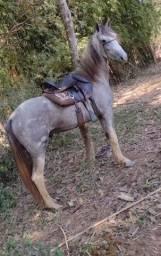 Título do anúncio: Potro Mangalarga Marchador Futuro Garanhão Registrado Pampa De Tordilho