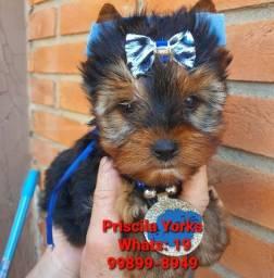 Título do anúncio: Yorkshire Terrier pequeninos