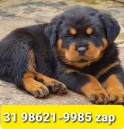 Título do anúncio: Canil Filhotes Criação Profissional BH Rottweiler Labrador Golden Pastor Akita Boxer