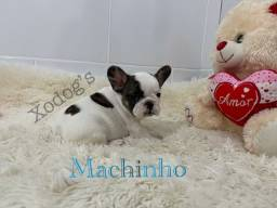 Título do anúncio: Bulldog francês filhotes !!!
