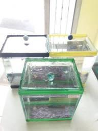 Aquario de betta