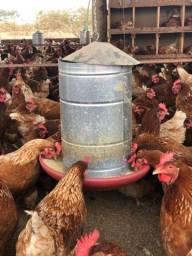 Comedouros tubulares de 20 kg, para galinhas, 250 unidades