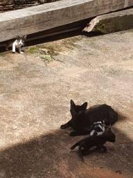 Doação responsável de gatinhos com a mãe