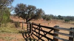 Chácara 9,8 hectares - pertinho de C.G