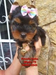 Título do anúncio: Miniaturas de Yorkshire Terrier e Maltês
