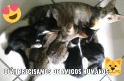 Gatinhos para adoção responsável Madalena