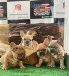 Título do anúncio: Bulldog Francês Porte Mini