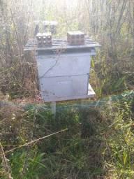 Vendo caixas de abelha com abelhas
