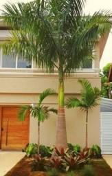 Título do anúncio: Palmeira