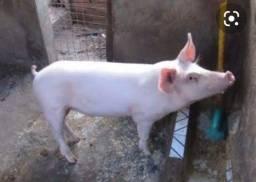 Título do anúncio: Por motivos de viagem estou doando esse porquinho
