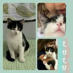 Filhote Gatinha Lulu para adoção