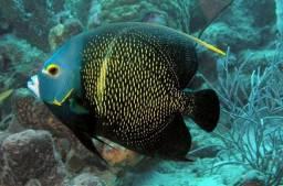 Salvador aquários ,montagens personalizadas