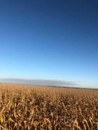 [Fazenda Top em Lavoura] 33,5 Alq. Inaciolândia-GO