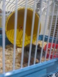 Título do anúncio: Vendo um hamster chinês vai com gaiola, comida tudo completo. Comprei tem 2 dias.