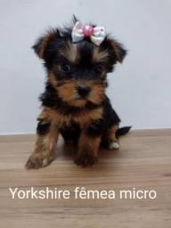 Linda Yorkshire micro