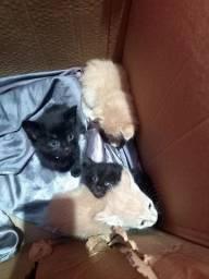 Título do anúncio: Estou doando 4 gatinho filhotes