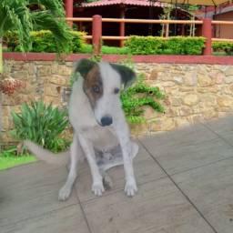 DOAÇÃO lindo cachorrinho 8 meses