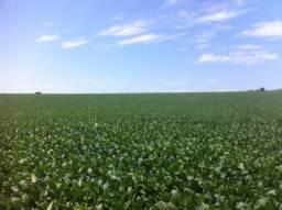 Fazenda 150 Alqueires, Próximo a Ourinhos-Sp