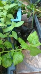 Título do anúncio: Filhote de gato para doação